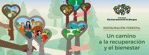 Lee más sobre el artículo Día Internacional de los Bosques