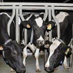 Asturias lidera la defensa de la Ganadería Extensiva