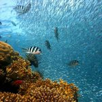 Día Mundial de los Océanos. 8 de Junio 2021