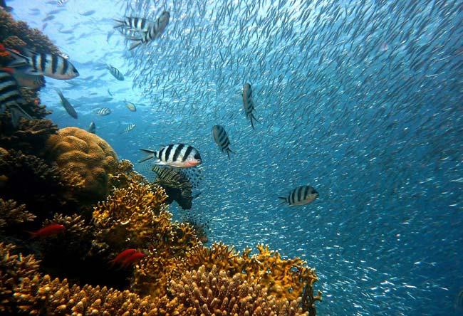 Lee más sobre el artículo Día Mundial de los Océanos. 8 de Junio 2021